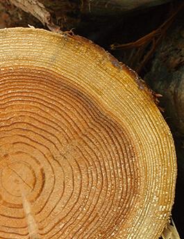 みやざき杉100%使用